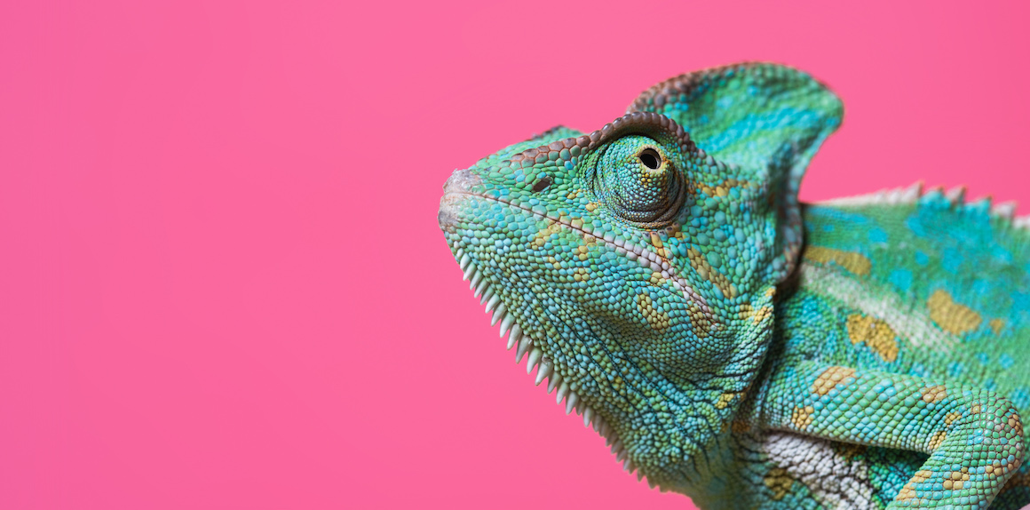 MarketStar-Blog148-3-Steps-to-Unlock-your-Chameleon-Sales-Abilities-Recognition-Adjustment-and-Execution